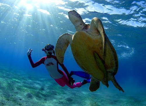 Черепаха Бисса: кто она?