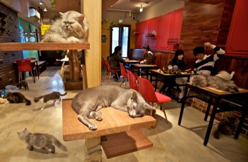 Открыто кошачье кафе в Техасе