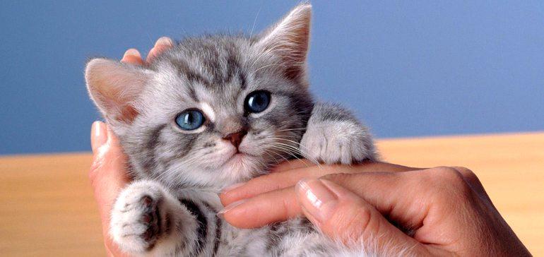 Как определить возраст котенка?