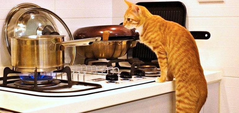 Приготовить еду для кота самостоятельно