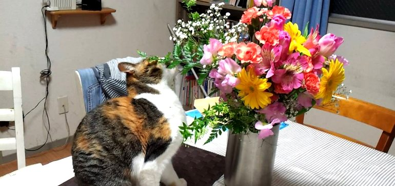 Как не дать кошкам есть растения