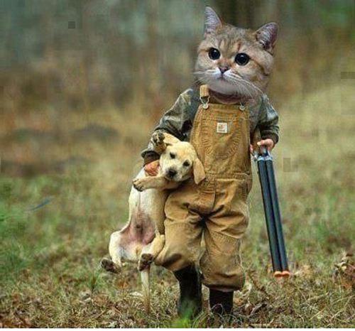Почему кошки и собаки враждуют