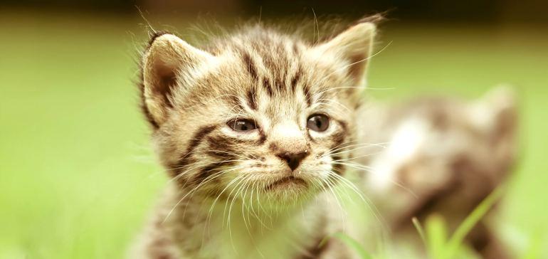 Дрессировка котёнка дома
