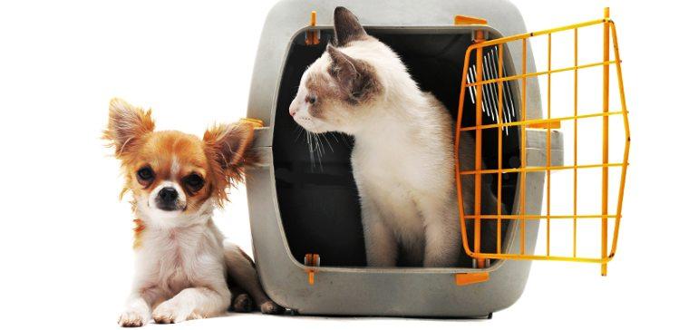 Кошка не хочет в переноску? Узнайте как совладать