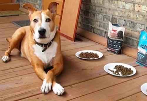 Чем кормить собаку при диабете