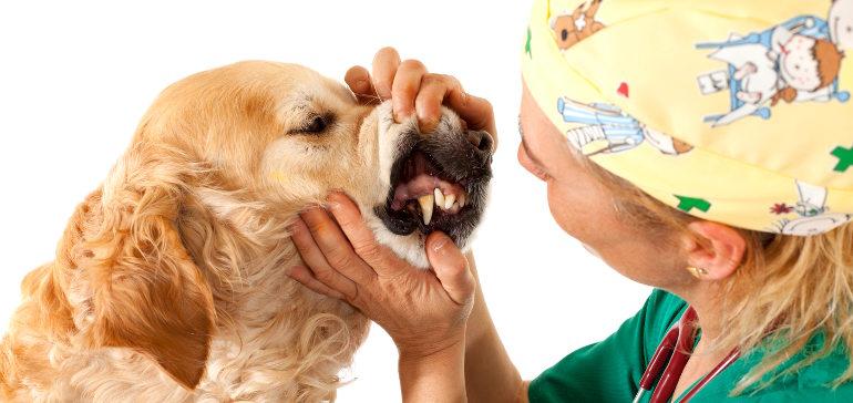 Что говорят зубы о возрасте собаки