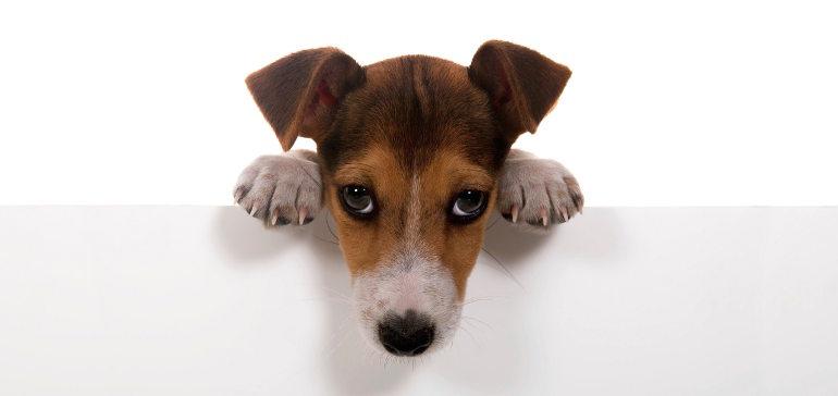 А вы готовы завести собаку?
