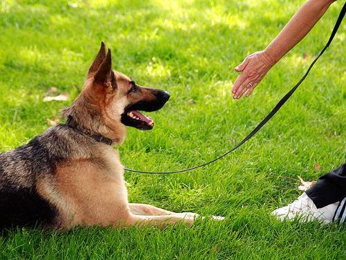 Как самостоятельно научить собаку команде