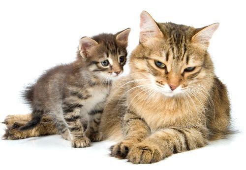 кошка кусает котят