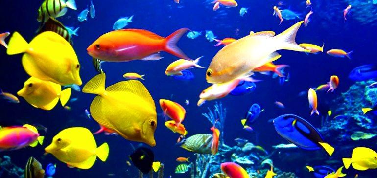 Как акклиматизировать аквариумную рыбку?