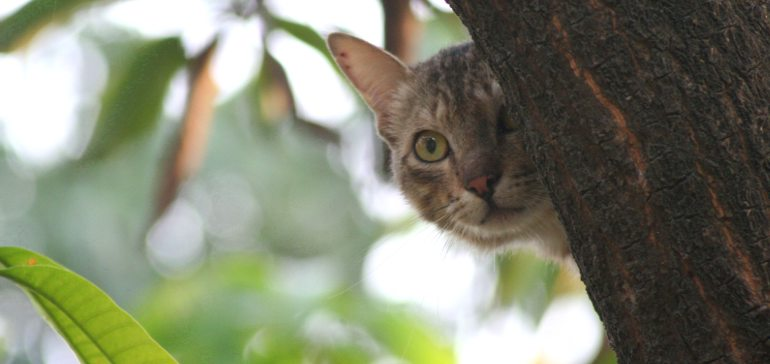 Кошка потерялась. Как искать?