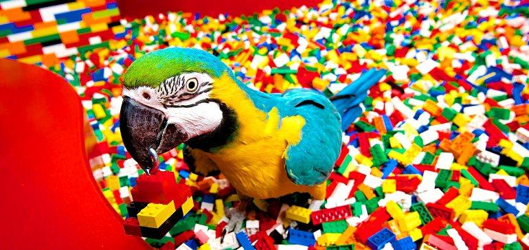 Попугай много шумит. Что делать?