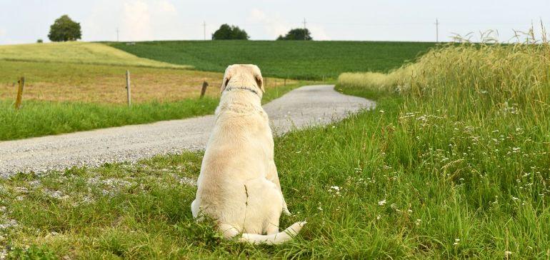 Потерялась собака. Как найти?