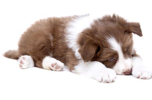Глистогонное для собак и вывод глистов у щенков