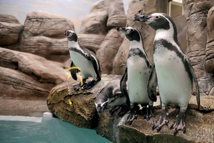 В Новосибирском зоопарке открылся новый павильон с пингвинами и обезьянами