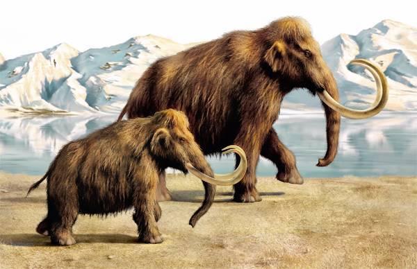 Якутские и корейские ученые на начальном этапе программы клонирования мамонта