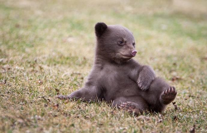 Первое знакомство медвежонка со скунсом