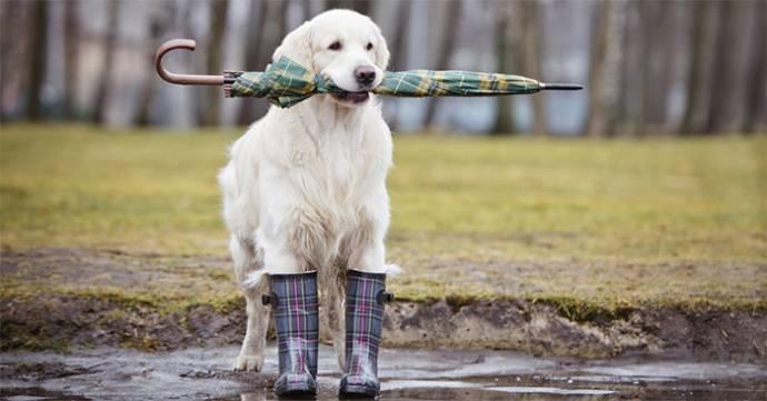 Собачьи дождевики и «вывернутые» зонтики: защищаем своего питомца от дождя