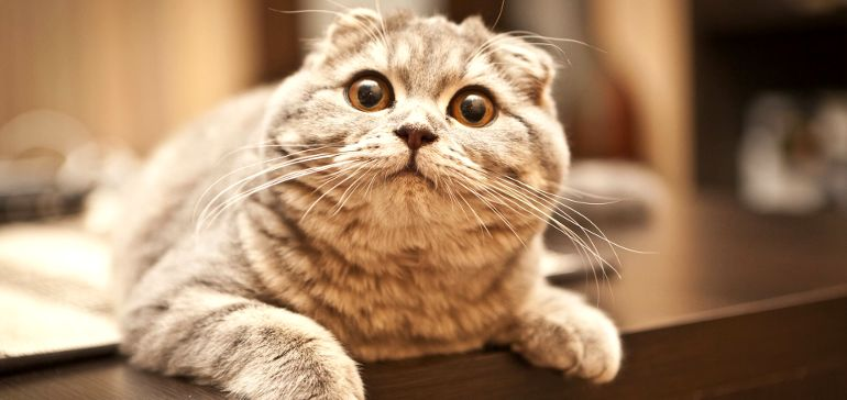 Как понять поведение кошки?