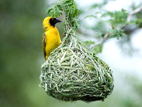 Какую птицу выбрать себе в дом?
