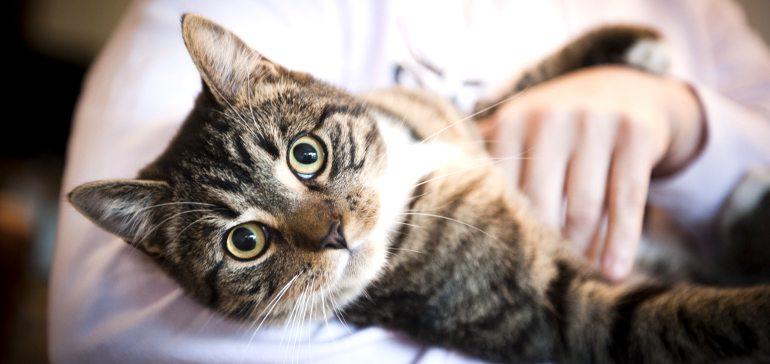 Как дисциплинировать кошку?