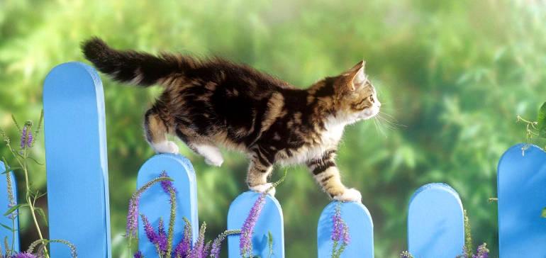 Выпускать ли кошку на улицу?