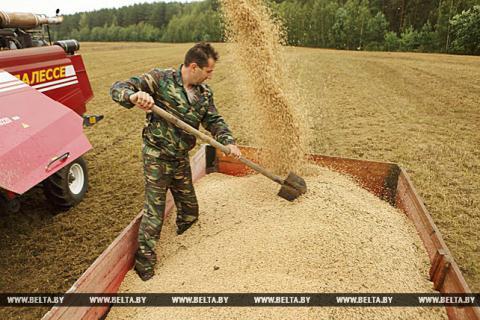 Вести с полей: Третий миллион тонн зерна намолочен в Беларуси