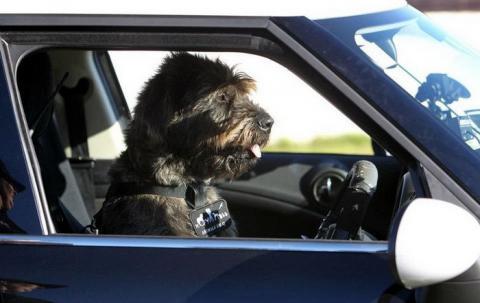 В США две собаки угнали машину своей хозяйки (Видео)
