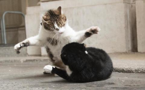 Безобразные драки на Даунинг-стрит: главные коты Британии делят территорию (ФОТО)