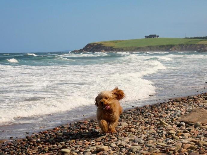Как пес Самсон отдыхал в Новой Шотландии