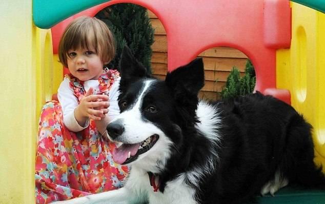 Бордер-колли унюхала у девочки лейкоз, что помогло начать раннее лечение