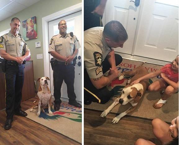 В США бродячая собака спасла женщину от грабителя