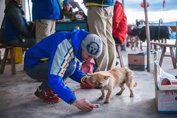 Бездомная собака пробежала 100 километров вместе с марафонцем