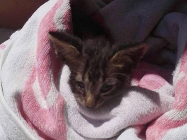 В Италии сотрудники береговой охраны реанимировали утонувшего котенка