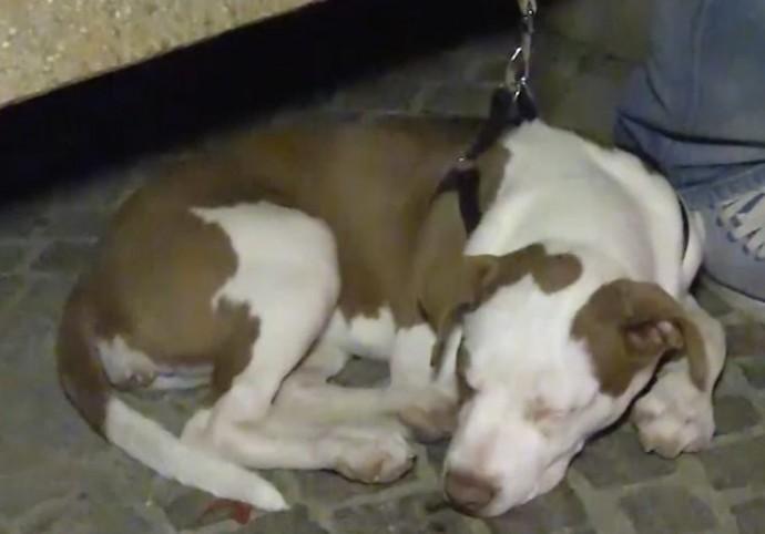 В Италии семья спаслась от землетрясения благодаря щенку