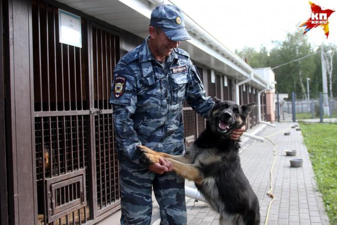 В Нижегородской области работает служебный пес-полиглот