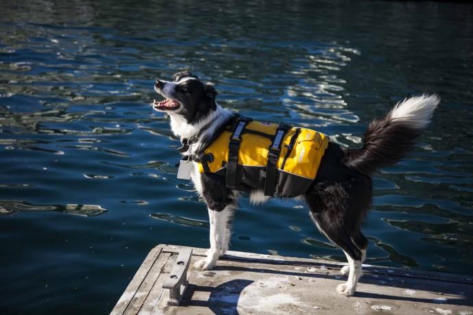 В Австралии собаку приняли на работу на должность