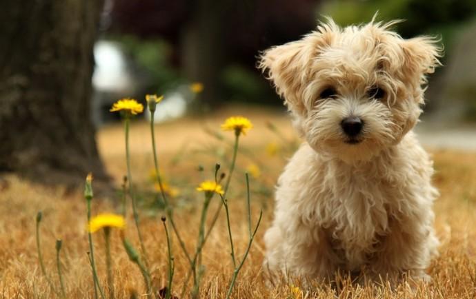 Правильный корм для маленьких собак