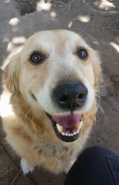 Собака, которая обожает получать почту