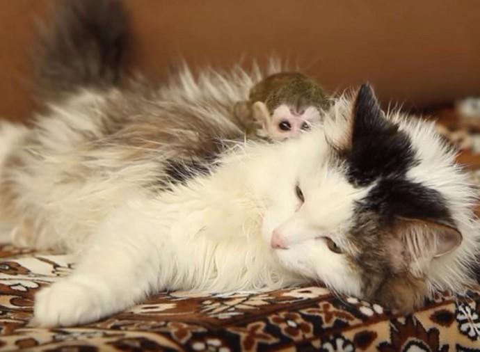 В Тюмени кошка