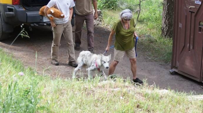 Бродячий волкособ с окраин Лос-Анджелеса нашел приют и подругу