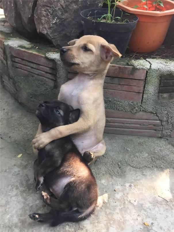 Обнимающиеся щенки из буддийского храма в Вьетнаме