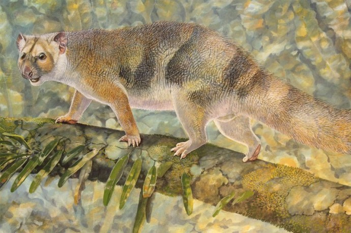 В Австралии в древности обитал сумчатый