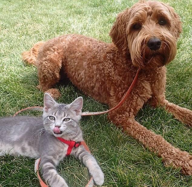 Собака и котенок путешествуют вместе