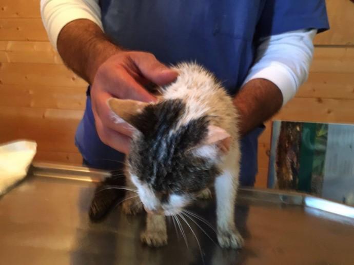 В Италии под завалами нашли живую кошку спустя пять дней после землетрясения