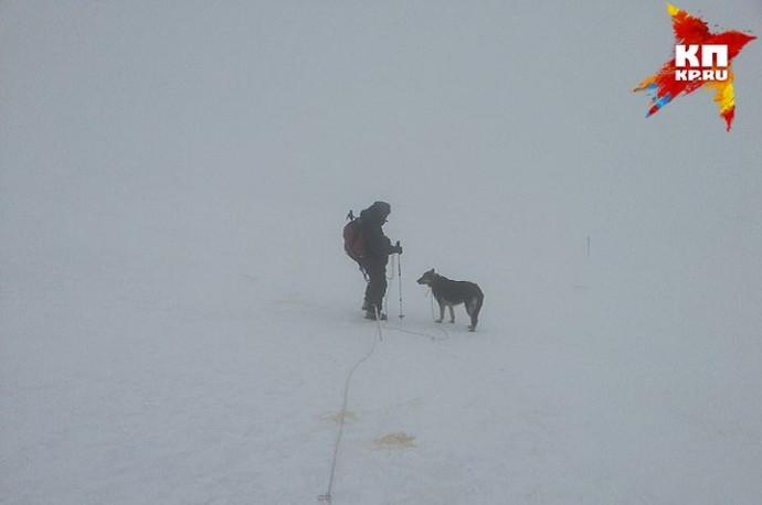 Российские альпинисты спасли брошенную на Эльбрусе овчарку