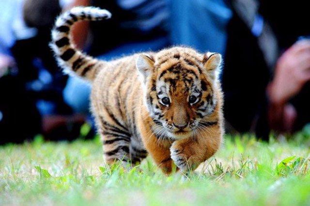 Сайт о домашних и диких животных