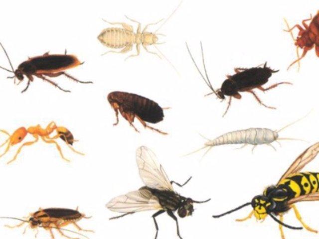 Методы профилактики и борьбы с насекомыми