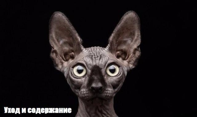 Первый украинский портал, посвященный животным
